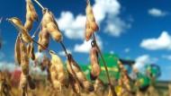 Anleger investieren immer mehr in Agrarrohstoffe wie Sojabohnen.
