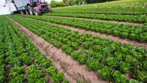 Institutionelle Anleger entdecken den Landbau
