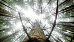 Patient Wald