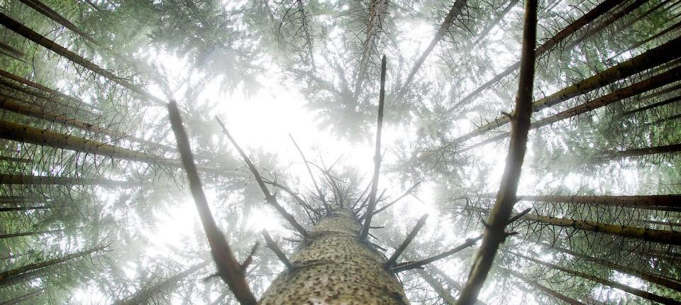 Ein Spaziergang durch den Forst fördert die Gesundheit des Menschen, dem Wald selbst geht es aber gerade gar nicht gut.