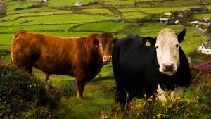 Irland kehrt erfolgreich an Kapitalmarkt zurück