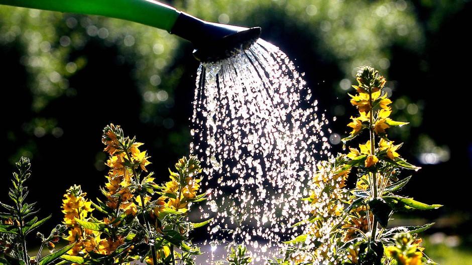 Wer ein grünes Paradies schaffen will, muss mehr tun als gießen.
