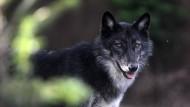 Wolfsstunde