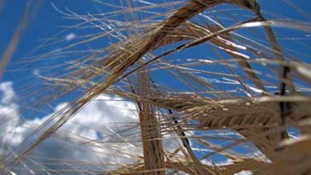 Weizen wird knapp