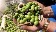 8000 Jahre altes Olivenöl