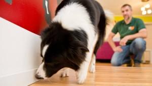 Hunde spüren Schimmel auf