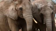 100-jährige Nonne sieht erstmals Elefanten