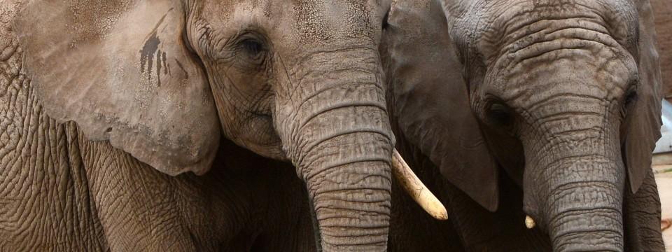 riesiges geschenk 100 j hrige nonne sieht erstmals elefanten. Black Bedroom Furniture Sets. Home Design Ideas