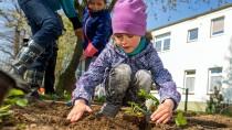 Ob man im Garten ein Gemüsebeet anlegen darf, regelt der Mietvertrag.