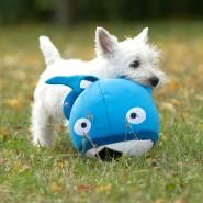 Hund mit Booga-Ball von Karlie