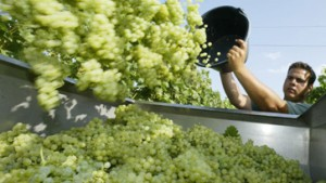 Wein bietet Investoren neue Anlagechancen