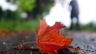 In Maßen schön, in Massen glitschig: Das bunte Herbstlaub.