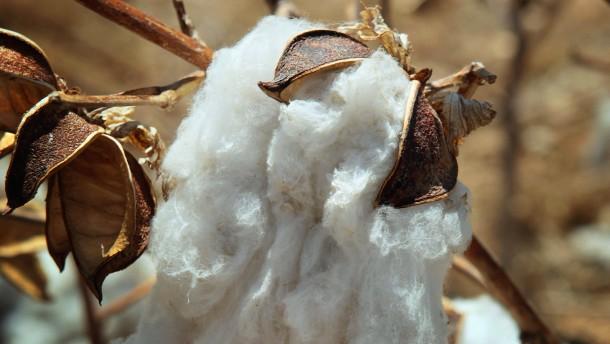 Indiens Exportstopp für Baumwolle lässt die Märkte rätseln