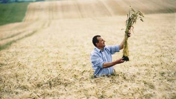 Aktie von Syngenta günstiger als jene von Monsanto