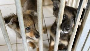 Hoffnung für Haustiere