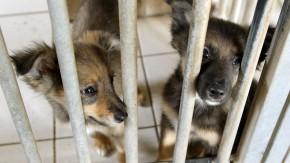 Steuertipp: Hoffnung für Haustiere
