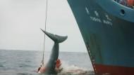 Der vor allem in westlichen Ländern weit verbreitete Gedanke, Wale besonders schützen zu müssen, stößt in weiten Teilen der japanischen Bevölkerung auf Unverständnis