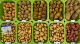Kartoffeln um mehr als die Hälfte teurer