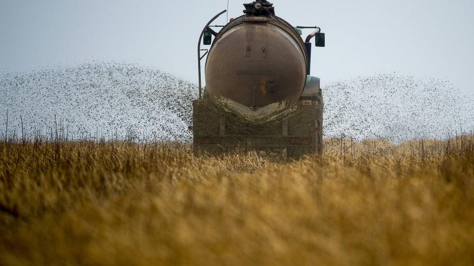 Eingeschränkt: In den mit Nitrat besonders belasteten Gebieten müssen Bauern mit Stickstoffdünger fortan vorsichtiger sein