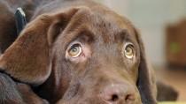 Ein Hundeblick erweicht das Herz - trotzdem ist der Vierbeiner in der Pension oft besser aufgehoben als im Urlaubsort.