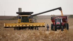 Rekordernten und niedrige Preise für Mais und Weizen