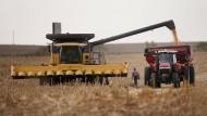 Zusätzliche Regenfälle im September führen zu einer Rekord-Maisernte in Amerika