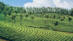 Aktie von Tata Tea läuft nach oben