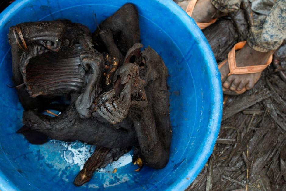 Fleisch der Bonobo Affen anzubieten ist illegal, dennoch ist es in Mbandaka kein Problem es zu beschaffen.