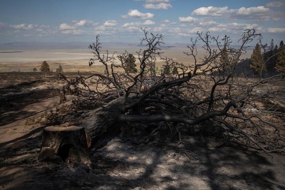 Eine niedergebrannte Kiefer liegt in den ausgebrannten Wäldern des Fremont National Forest.