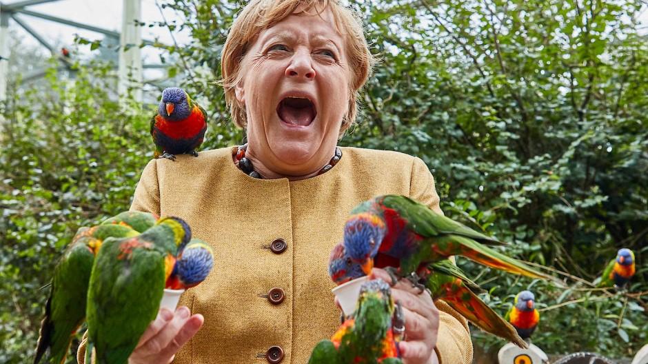 Zum Ende lässt Merkel kein gutes Fotomotiv aus: Die Kanzlerin im Vogelpark Marlow