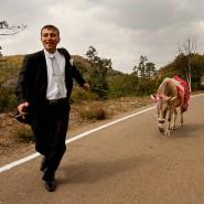 Während einer Massenhochzeit nahe der Stadt Vank: Ein Bräutigam hat eine Kuh im Schlepptau.
