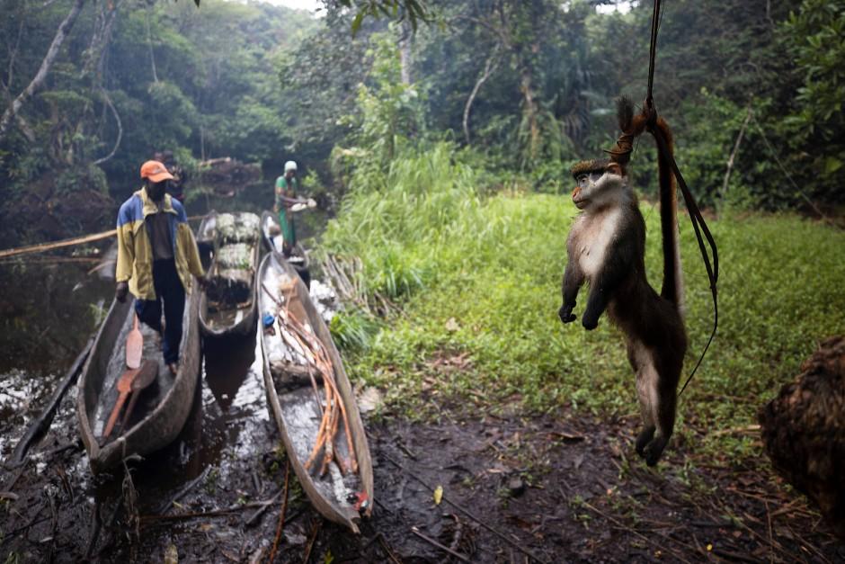 Die Wilderer hängen ihre Beute auf, um sie vor Ameisen fernzuhalten.