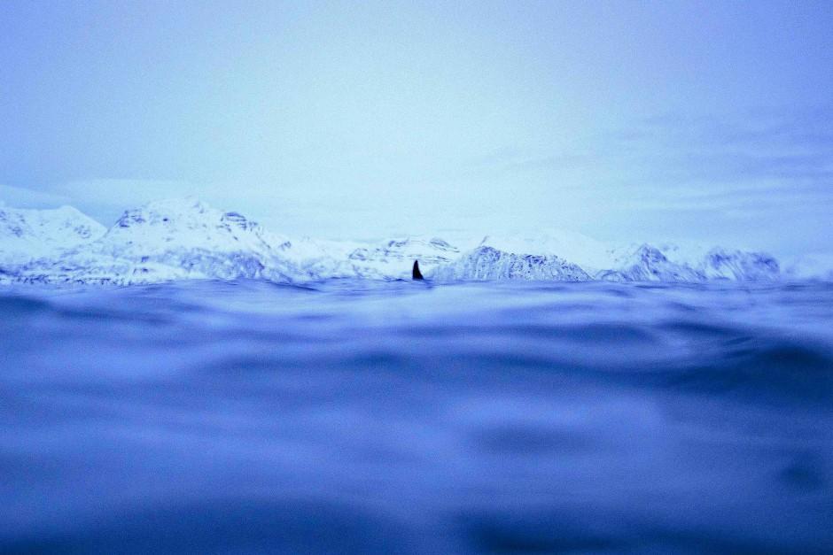 Faszinierende Perspektiven: Rückenflossen vor norwegischer Fjord- und Bergkulisse.