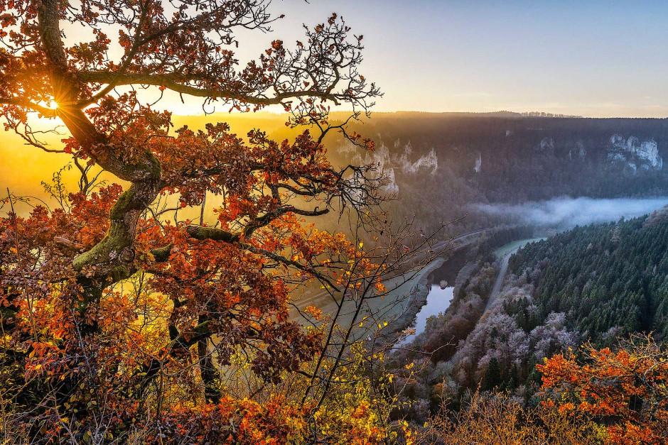 Knorrige kleine Eichen prägen die Felsköpfe des Oberen Donautals und sind, wie hier am Eichfelsen, namensgebend. Von diesem bekannten Aussichtspunkt hat man einen spektakulären Ausblick über dieses Tal.