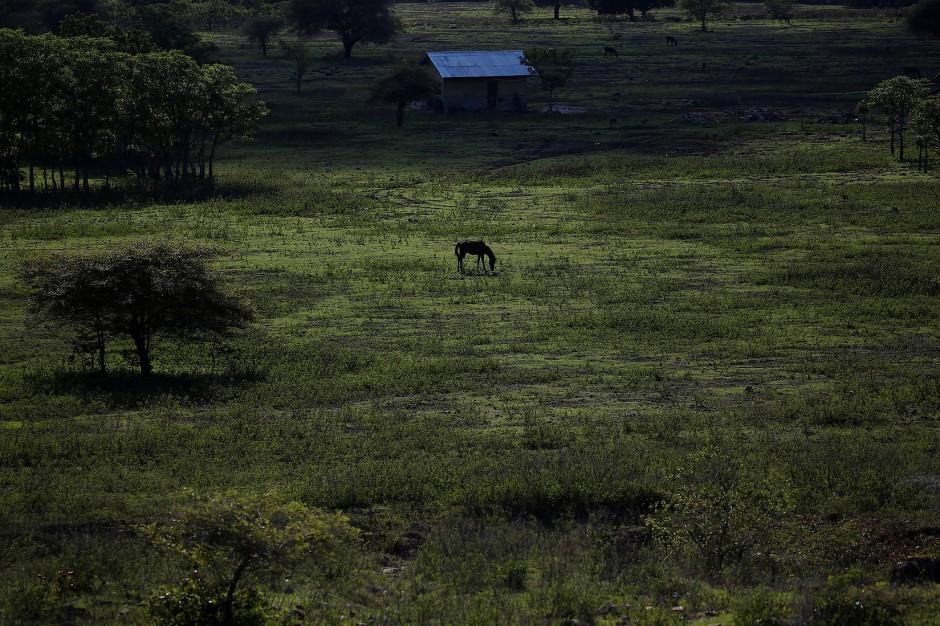 Einsam steht das Pferd auf der Weide im Bezirk Kanatang.