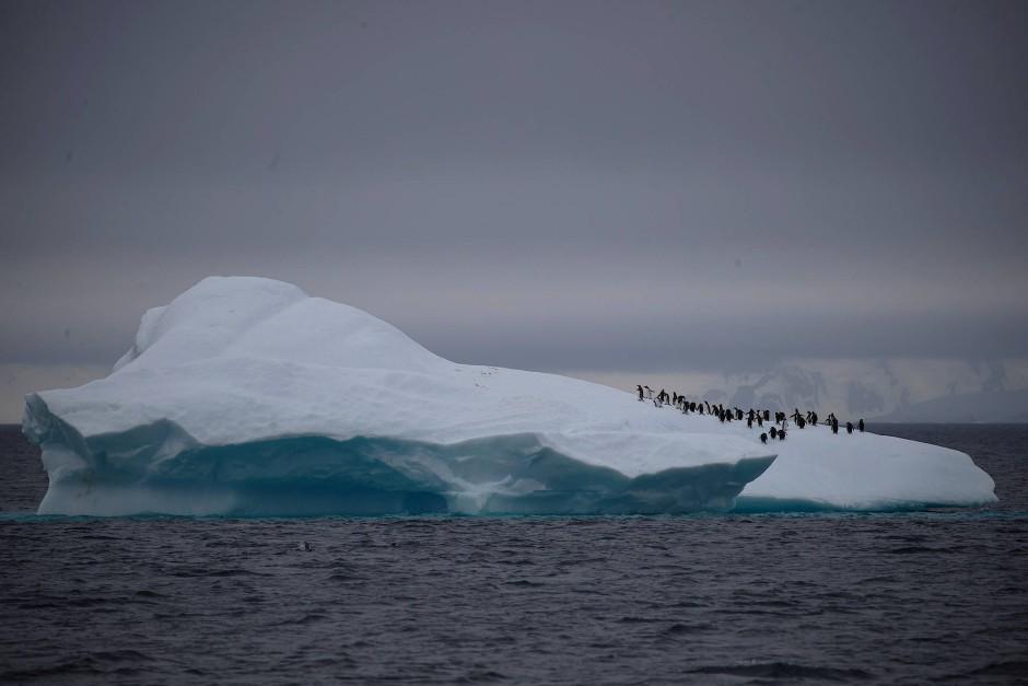 Auf einem Eisberg im Lemaire Kanal.