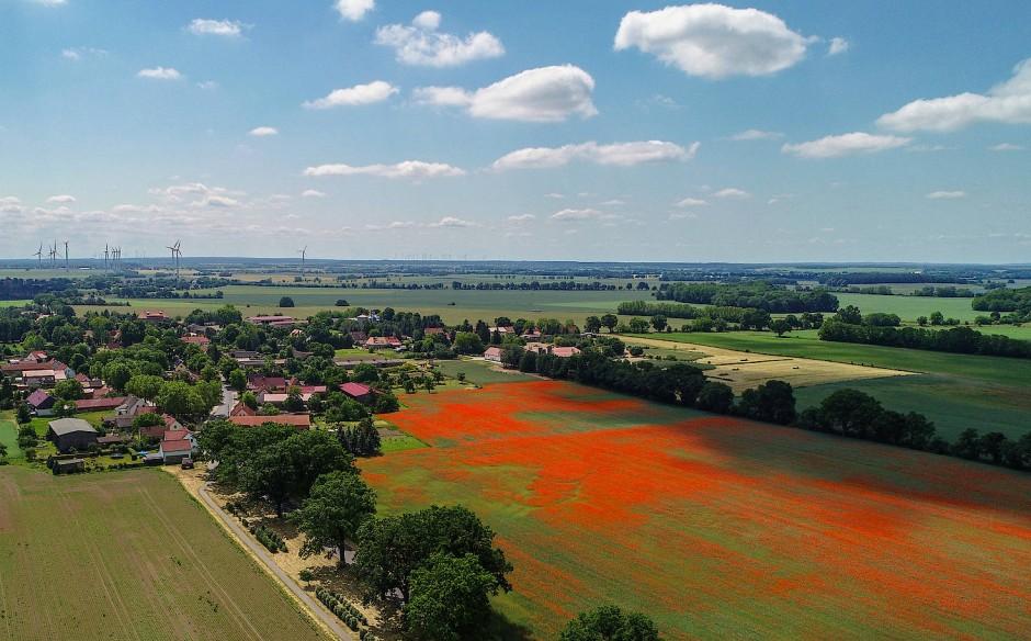 Ein Getreidefeld voller roter Klatschmohnblüten leuchtet in der Mittagssonne im Landkreis Märkisch-Oderland nahe Seelow in Brandenburg.