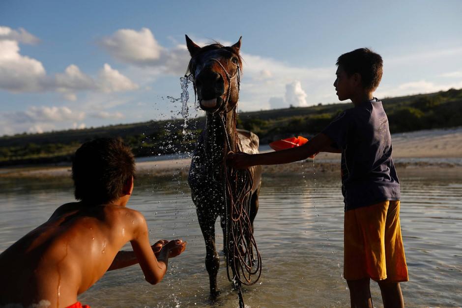 "Dimas Mbaha Konda Lura und sein Cousin Simon Kopa Laki Jawa baden ""Buru-Buru"", das Pferd von Dimas Vater Ndelu Ndaha."