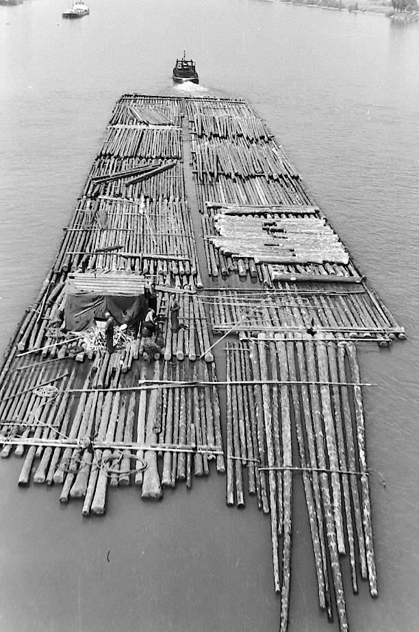 Holzfloß auf dem Weg rheinabwärts – Das Holz wurde in Mainz Kastel und Kostheim gesammelt, umgruppiert und mit Schleppervorspann Richtung Holland gezogen. Das Holz stammte meist aus dem Schwarzwald und wurde dort auf den kleinen Nebenflüssen (z.B. Murg und Kinzig) in den Rhein geflößt. Das war dort wegen des meist geringen Wasserstandes oft sehr beschwerlich. Daher wurden die Nebenflüsse oft an mehreren SteIlen aufgestaut, das Wehr geöffnet und mit dem Wasserschwall das Holz zur nächsten Staustufe geschwemmt. Diese Staustufen sind auch heute noch gut zu erkennen. Die letzte Floßfahrt erfolgte 1964.