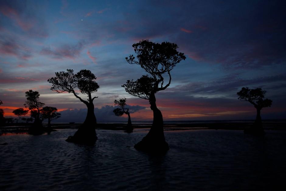 Für Touristen ein beliebtes Fotomotiv: Mangroven am Walakiristrand im Sonnenuntergang.