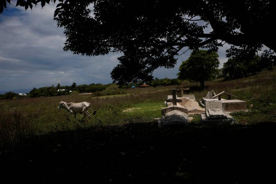 Die wenigen Tiere, die auf der Insel noch gehalten werden, sind völlig unterernährt.