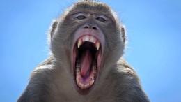 Stadt der rivalisierenden Affen