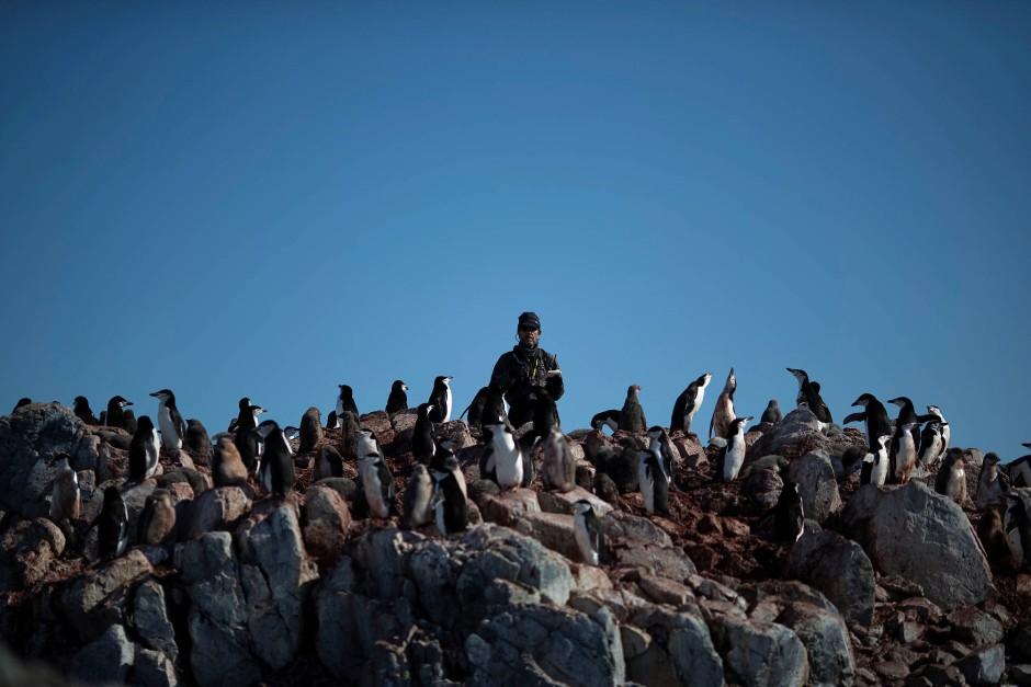 Mit dem Handclicker zählt Wissenschaftler Steve Forrest die Häupter seiner Lieben hoch oben in den Felsen auf Anvers Island.