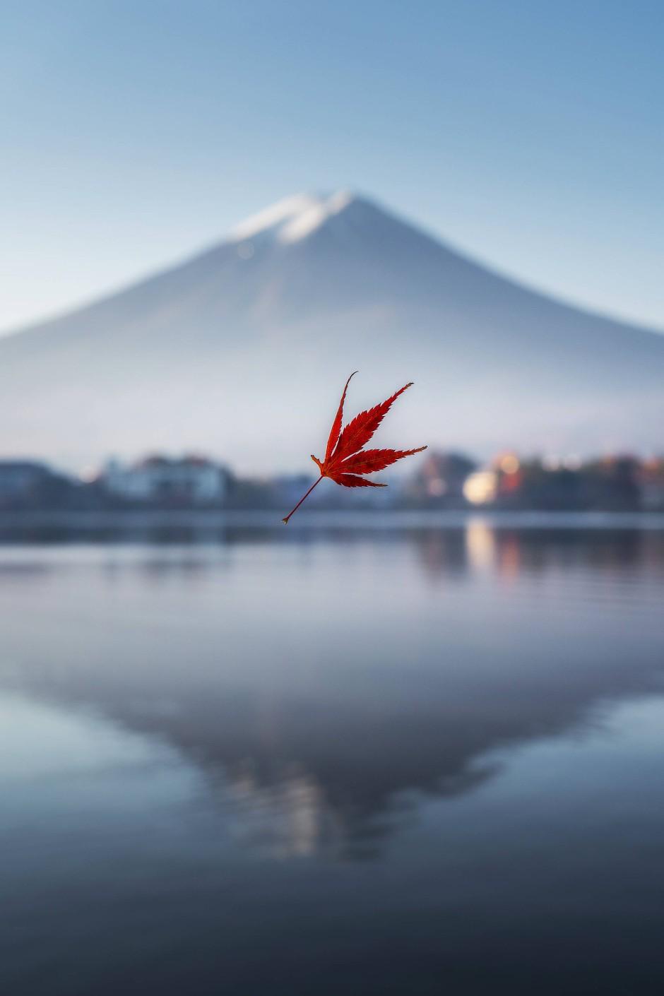 Ein herbstlich verfärbtes Blatt am Kawaguchi-See vor der Kulisse des japanischen Berges Fuji.