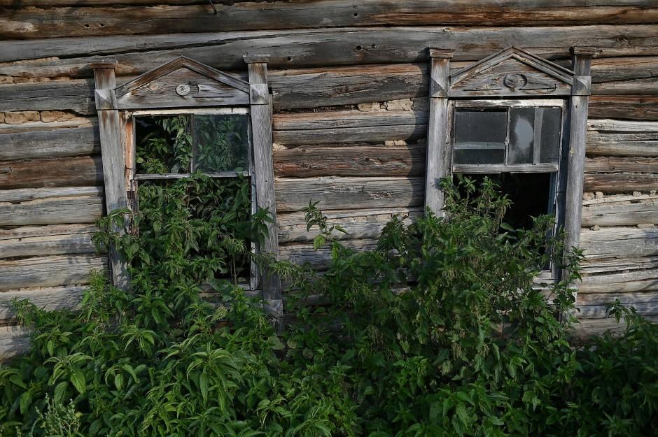 Pflanzen wachsen in einem verlassenen Haus.