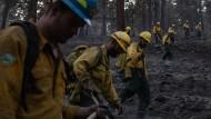 Seite an Seite wird nach überbliebenen Brandherden gesucht, die aus der Luft nicht gelöscht werden konnten.