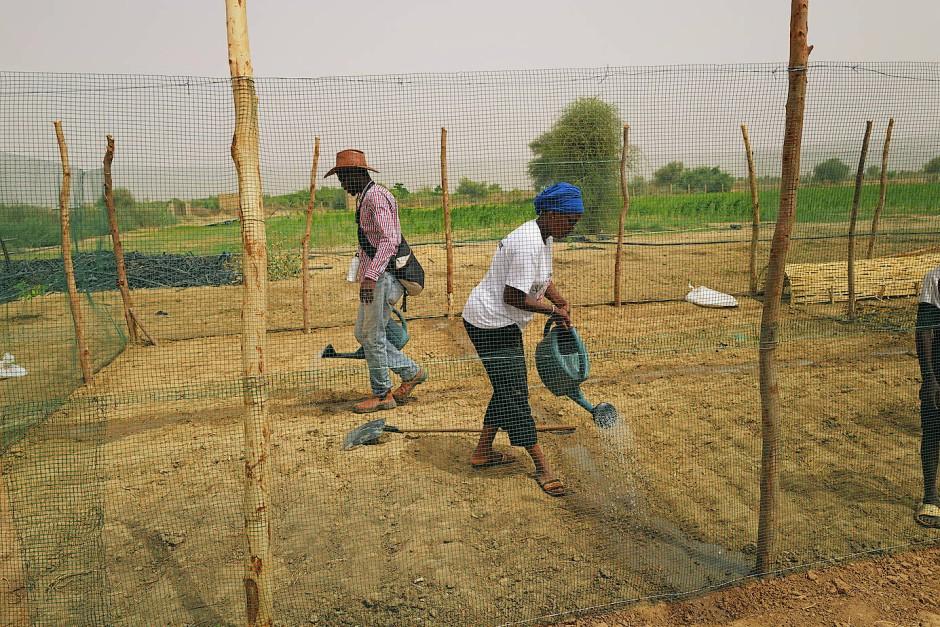 Zwei Mitarbeiter bereiten einen Käfig für Hühner vor.