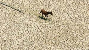 Dürre im Regenwald