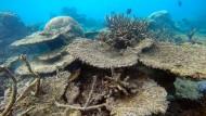 Das Great Barrier Reef vor der Großstadt Cairns im Osten des Landes.