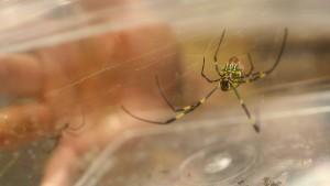 Angst vor Spinnen und Schlangen anscheinend angeboren